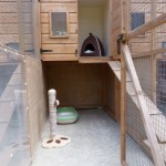 Bambers_Green_Cattery_accommodation